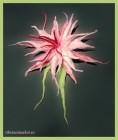 Украшение Дикая орхидея